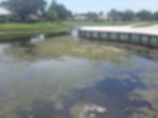 Algae in Lakes summer after renovation.