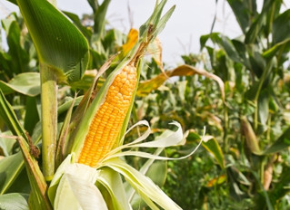 My Stance On GMOs