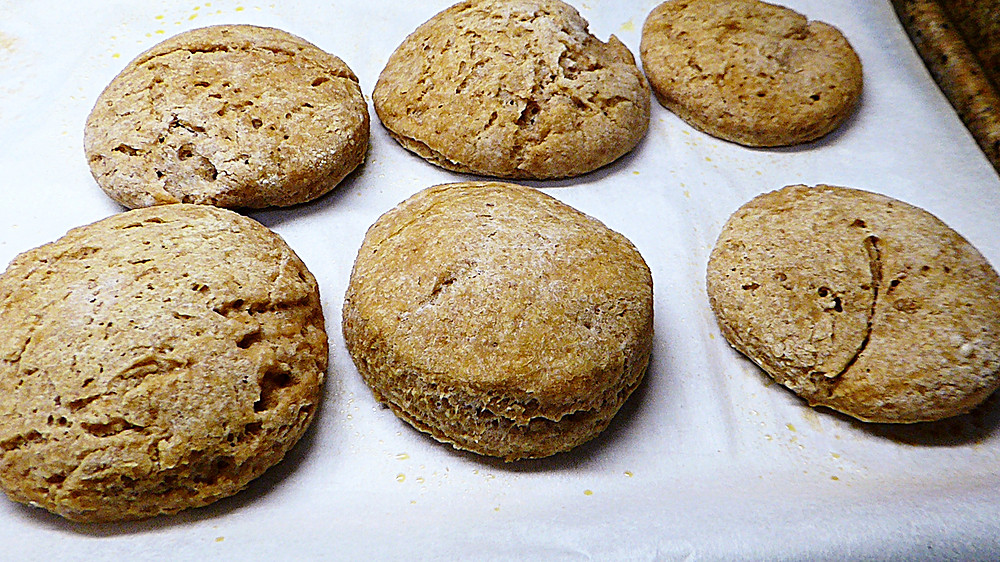 Lots of Sourdough Starter/Discard Biscuits