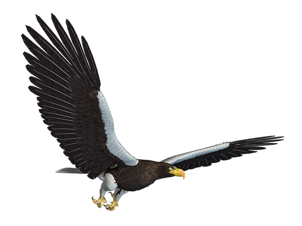 3-2-eagle-png-12.png