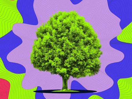 A música de árvores pela sonificação de biodata - Uma experiência impressionante