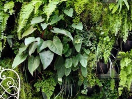 Teste acústico de um jardim vertical.