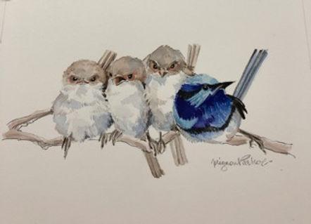 Mignon Parker - Splendid Wrens.jpeg