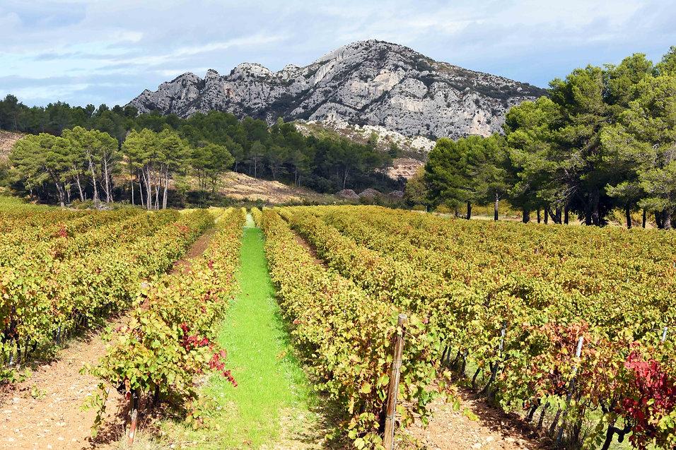 Les Alpilles, vinlandskap, berg_0568_W.j