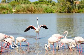 Flamingo 6848_W.jpg