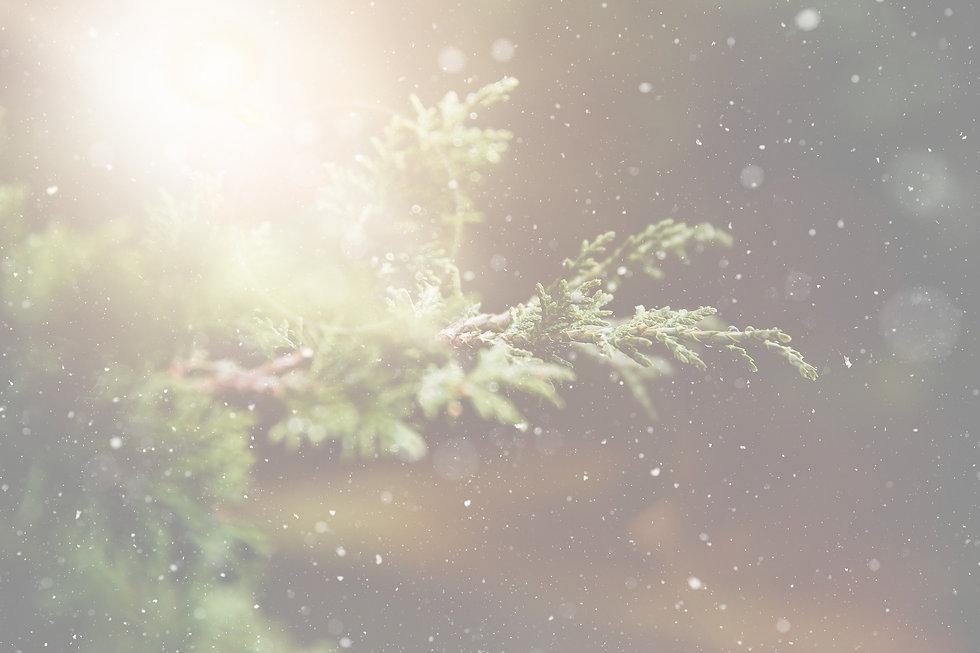 winter-1791370_1920_edited.jpg