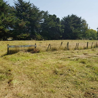 Overgrown Paddock after