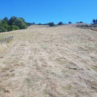 Steep Overgrown hillside after