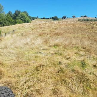Steep Overgrown hillside before