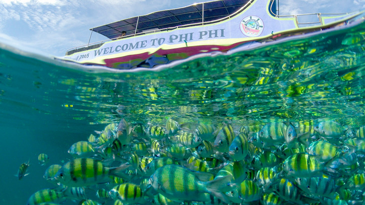 Phiphi Island  ,Thailand.