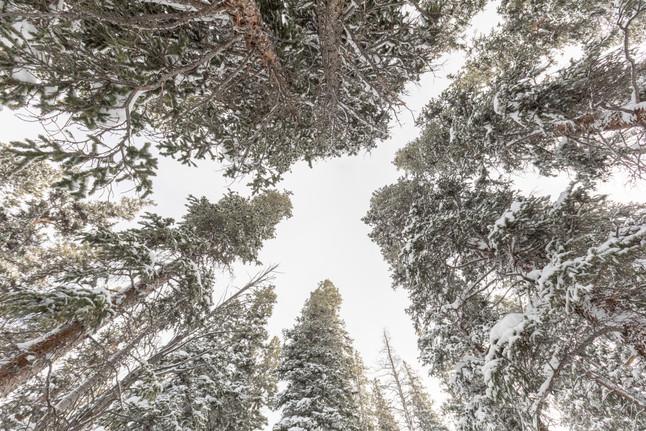 Brekenrigde ,Colorado Usa.