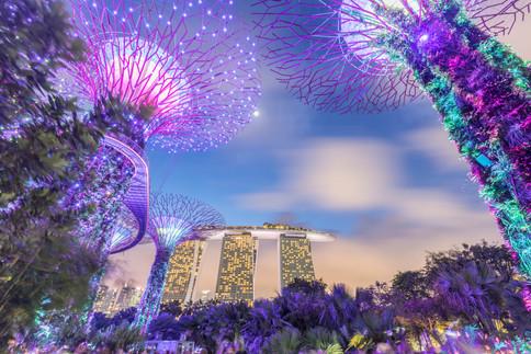 Singapore Supertree Grove.