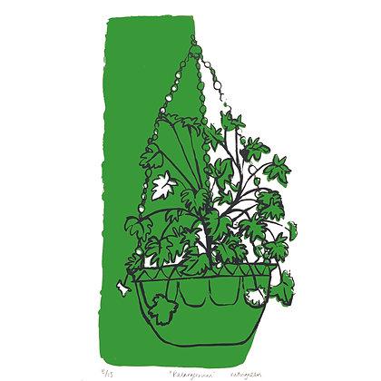 'Pelargonium'