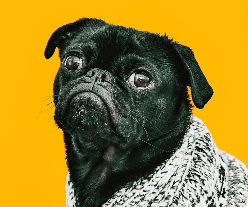 Hund, Schweinehund, Anstrengung, Prokrastination