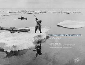 AMCC_BeringSeaElders-northern-bering-sea