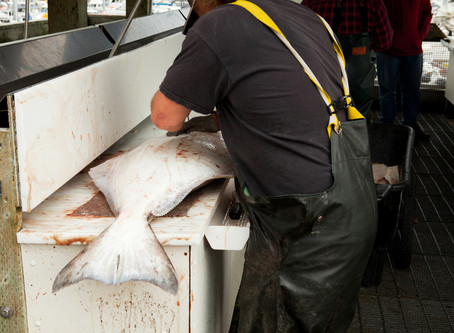 Opinion: Halibut Bycatch Limits Must Drop to Protect Communities of the Bering Sea