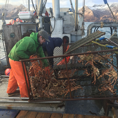 Tanner Crab Fishery Reopens in Kodiak: Theresa Peterson