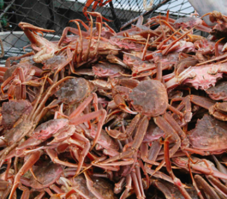 Catch 49 January Offering: Kodiak Tanner Crab And More!