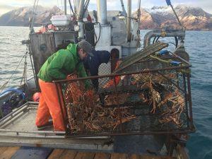 Tanner Crab Picking Pot