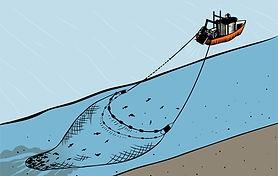 Bottom Trawling.jpg