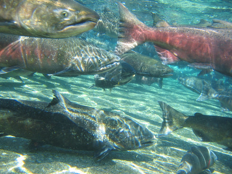 April Meeting Tackles Chinook Bycatch
