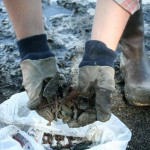In 2014, volunteers picked up 4,054 rusty nails from Anchorage's beaches.