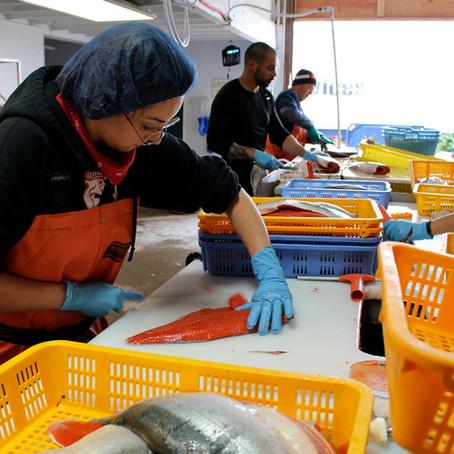 Order Now: Bristol Bay Sockeye Salmon