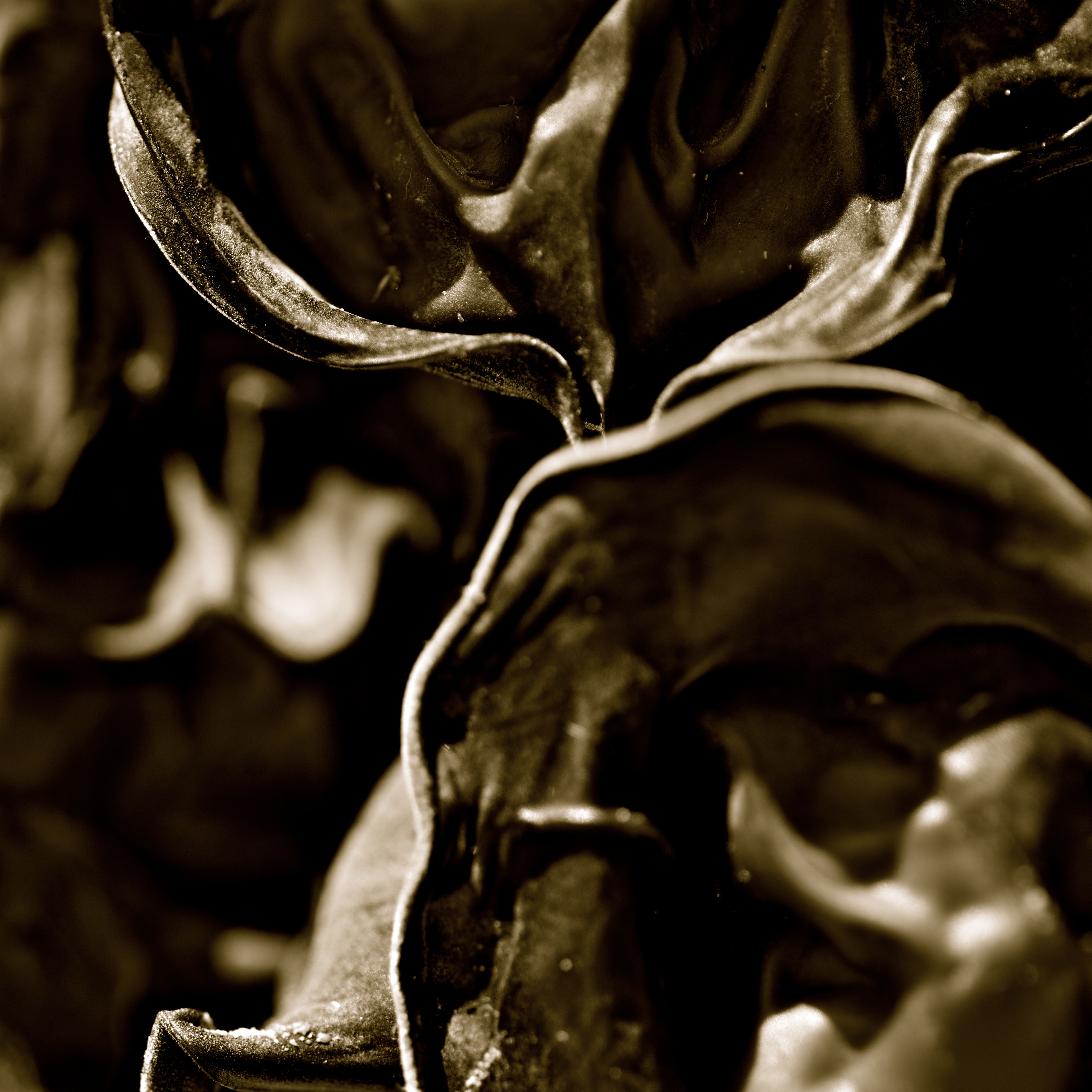 Fungus brunus