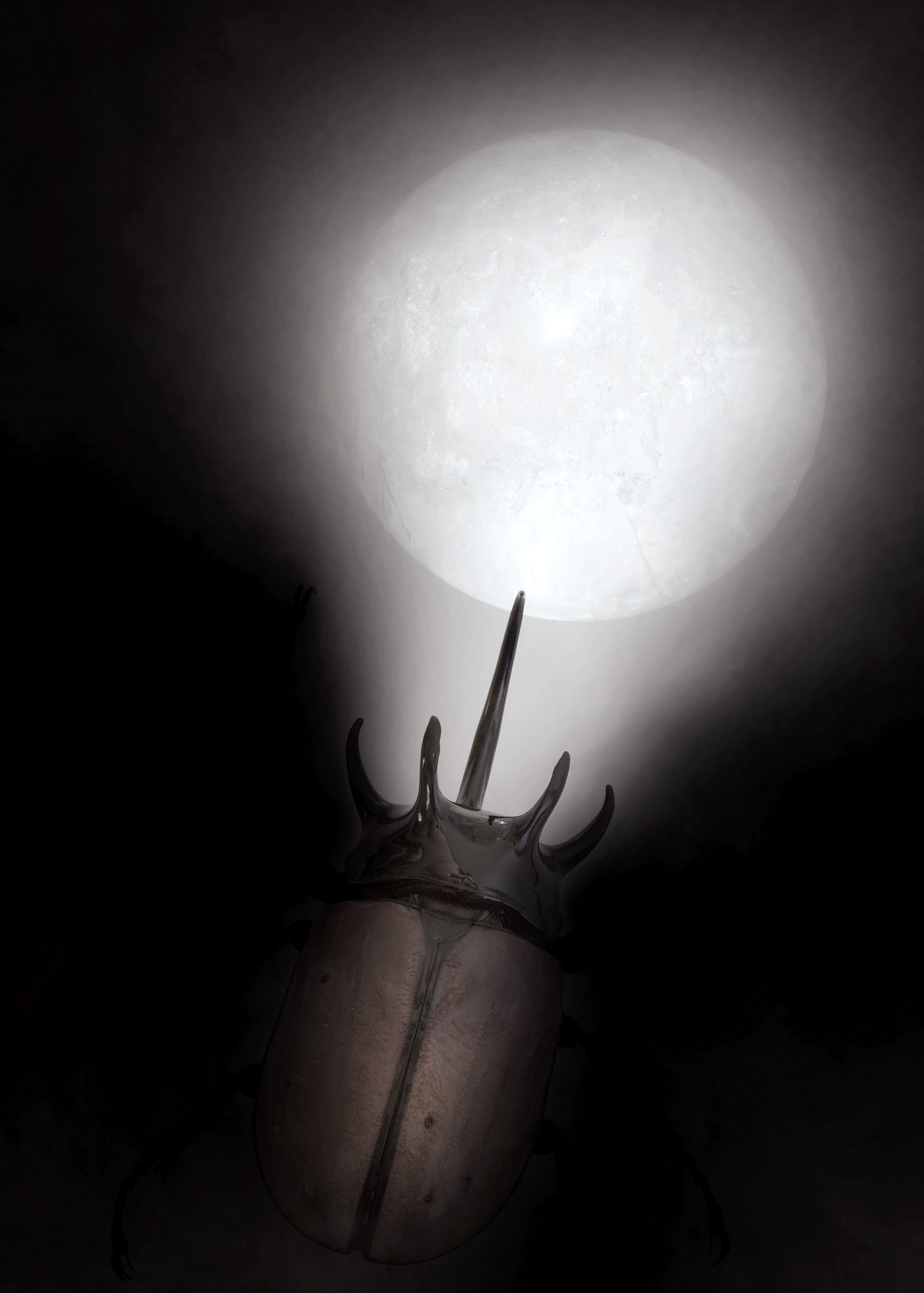 Beetle&Moon