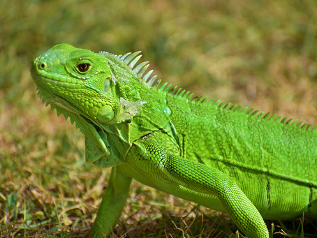 FWC Lawsuit: Support your reptile community!