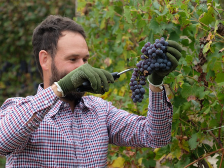 Glorious Italy conversation with.... Stefano Occhetti - winemaker-