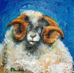 Achill Sheep