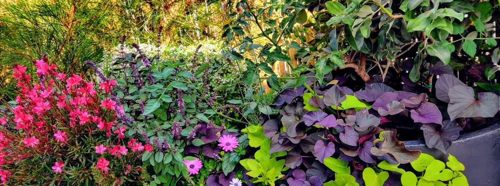 גינה משלבת פרחים וצמחי מאכל