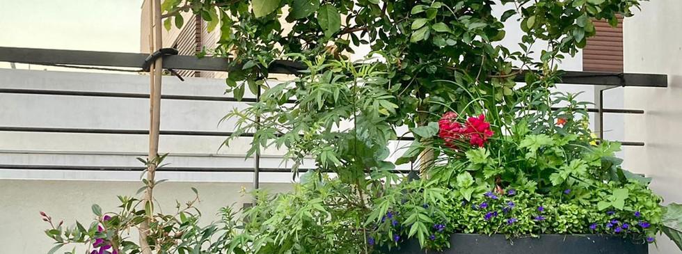 צמחי מאכל ותבלין בעציצ בטון בהזמנה אישית