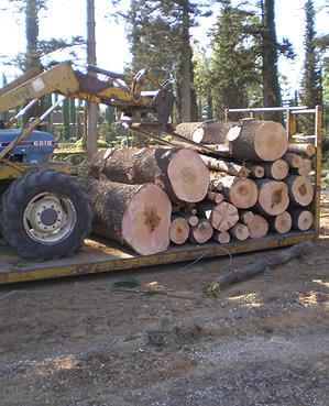פינוי גזם, עקירה וכרסום עצים