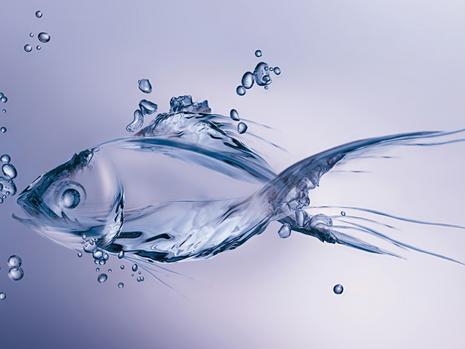 חכמת המים - המרחב הטיפולי שבין המדע למגע