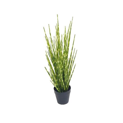 צמח מלאכותי- מסקיננטוס
