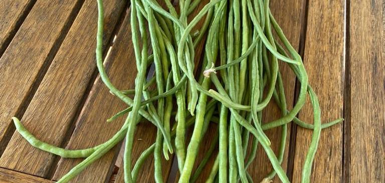 יבול של שעועית תאילנדית