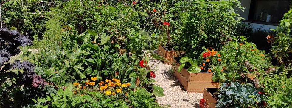 גינת קרקע ענקית בהרצליה עם ערוגות עץ בהתאמה אישית שפע של ירקות עונתיים המספקים את תושבי הבית