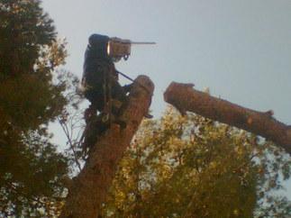 כריתת עצים
