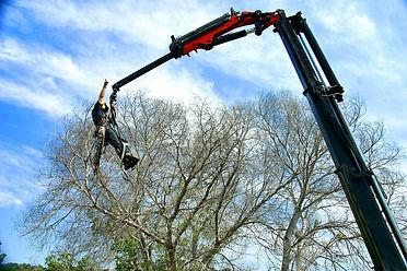 כריתת עצים- גיא ברלב