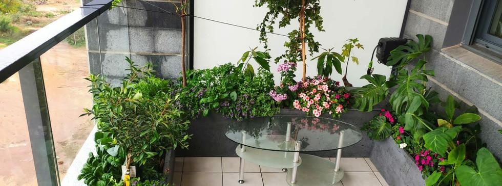 מגוון צמחים ביניהם: תרד תאילנדי שהפך לרב שנתי במיקרו אקלים המיוחד במרפסת הזו