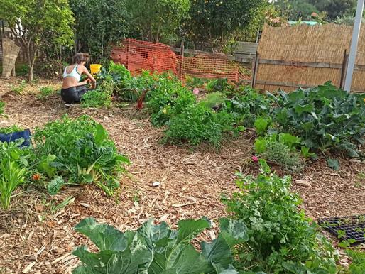 הרמוניה בגינה, איך יוצרים גינה אקולוגית?