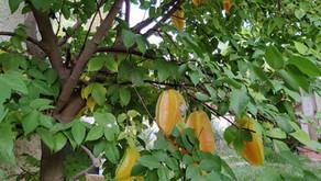 צמחים מיוחדים שאפשר לגדל במרפסת