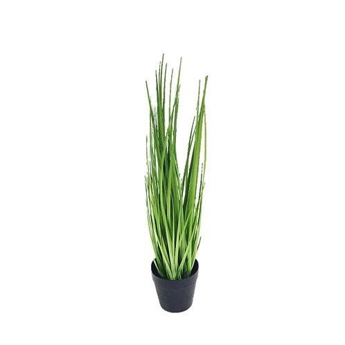 צמח מלאכותי- דייטס