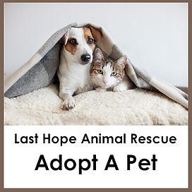 Adopt A Pet_Banner.jpg