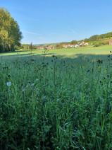 Blick auf Imsweiler