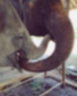 elefantes - chiang mai