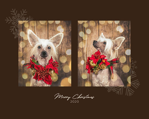 6P_.Christmas2in1_03.jpg