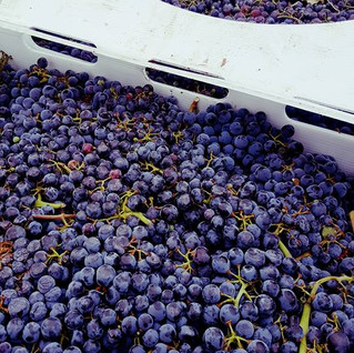 crates of grapes.jpg